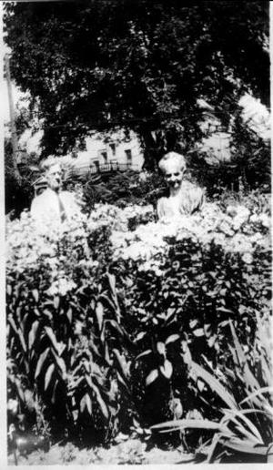 Primary view of object titled '[Photograph of Mary E. Molly George among maize stalks]'.