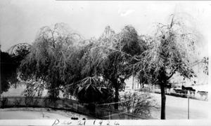 Primary view of object titled '[Icy trees that surround the fence line of the George house]'.
