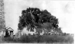 Primary view of object titled '[Large tree with many automobiles parked around it]'.
