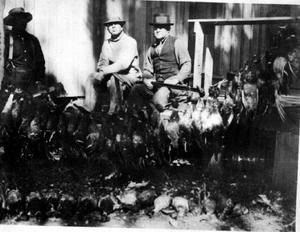 Primary view of object titled '[Three men next to a large amount of hunted ducks]'.