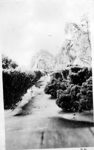 Primary view of object titled '[Photograph taken from the George house looking down the driveway]'.