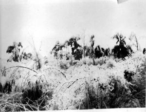 Primary view of object titled '[Photograph of an Overgrown Field]'.