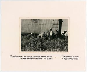Primary view of object titled '[Men Inspecting a Train Wreck in Bayou Goula, Louisiana]'.