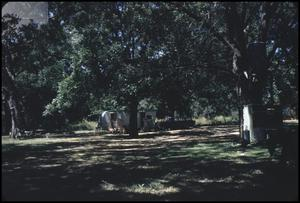 [Campground in Fentress, Texas]
