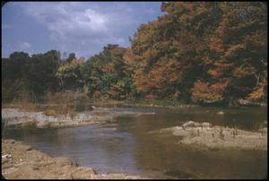 Primary view of object titled '[Autumn Leaves Along Guadalupe River]'.