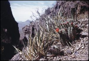 Primary view of object titled '[Cacti at the Window]'.