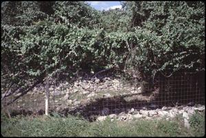 Primary view of object titled '[Wild Grapevines Along Highway 46]'.