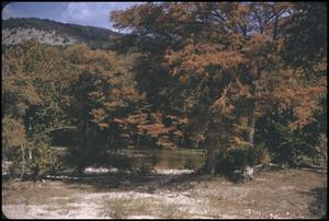 Primary view of object titled '[Guadalupe River Surrounded by Fall Foliage]'.