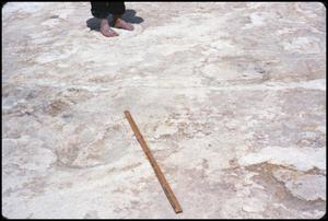 Primary view of object titled '[Dinosaur Footprints 4]'.