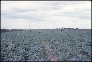 Primary view of object titled '[Rio Grande Valley Farm]'.