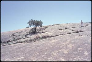 Primary view of object titled '[Lone Tree at Enchanted Rock]'.
