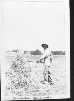 Primary view of object titled '[Photograph of Frankie Jodarski stacking hay]'.