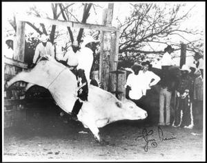 Primary view of object titled '[Cowboy Willie Thomas participating in bull riding competition at a rodeo]'.