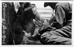 Primary view of object titled 'Branding Cattle at the Brite Ranch'.