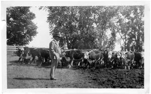 Primary view of object titled 'LC Brite with Cattle Going to Nebraska'.