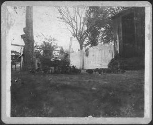 Primary view of object titled '[Two hens and chicks in a yard]'.
