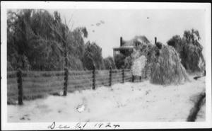 Primary view of object titled '[Ice covered fence and trees in front of the J.H.P. Davis house]'.