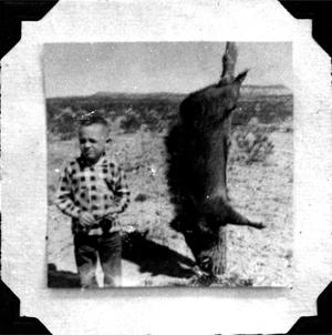 Primary view of object titled 'Javelina Hanging from a Fence Post'.
