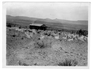 Primary view of object titled '[Sheep in West Texas]'.