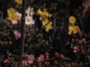 [The Peter Pauls Stewart Family Films, No. 44 - Flower Gardens]
