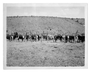 Primary view of object titled 'Cattle in Corral'.