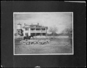 [A man on horseback watching over a flock of sheep at George Ranch house]