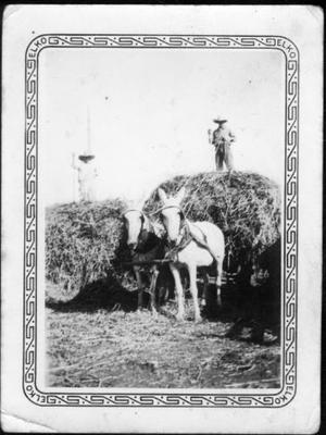 Primary view of object titled '[Two men standing on top of haystacks at the George Ranch]'.