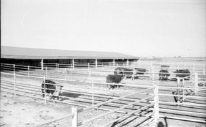 Primary view of object titled '[Cattle Pen]'.