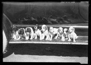 Primary view of object titled '[Puppies]'.