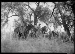 Primary view of object titled '[Photograph of Four Men and Four Horses]'.